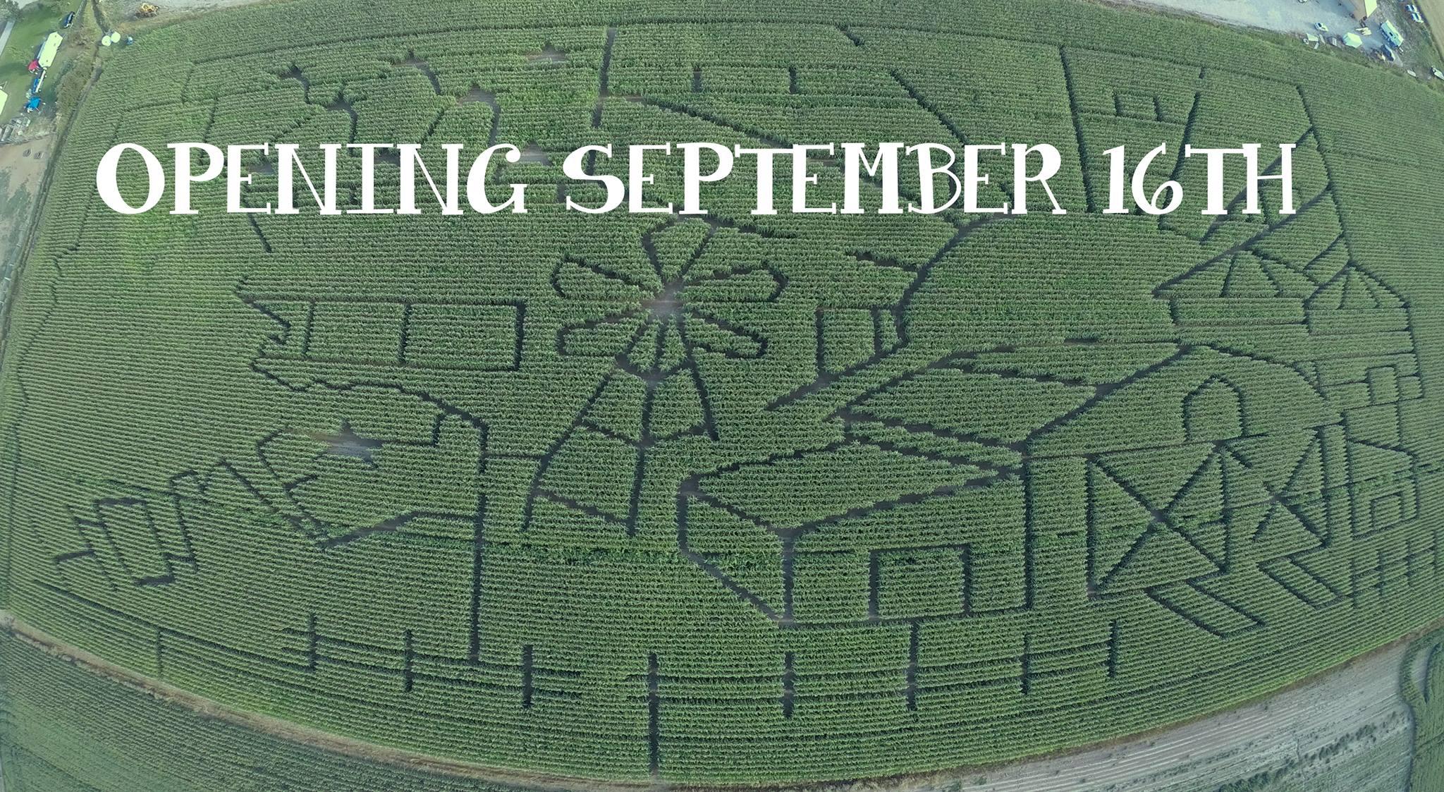 Country Trails Corn Maze