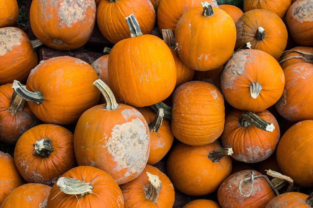 Carving pumpkins is one of the fun fall festivities in Rexburg.