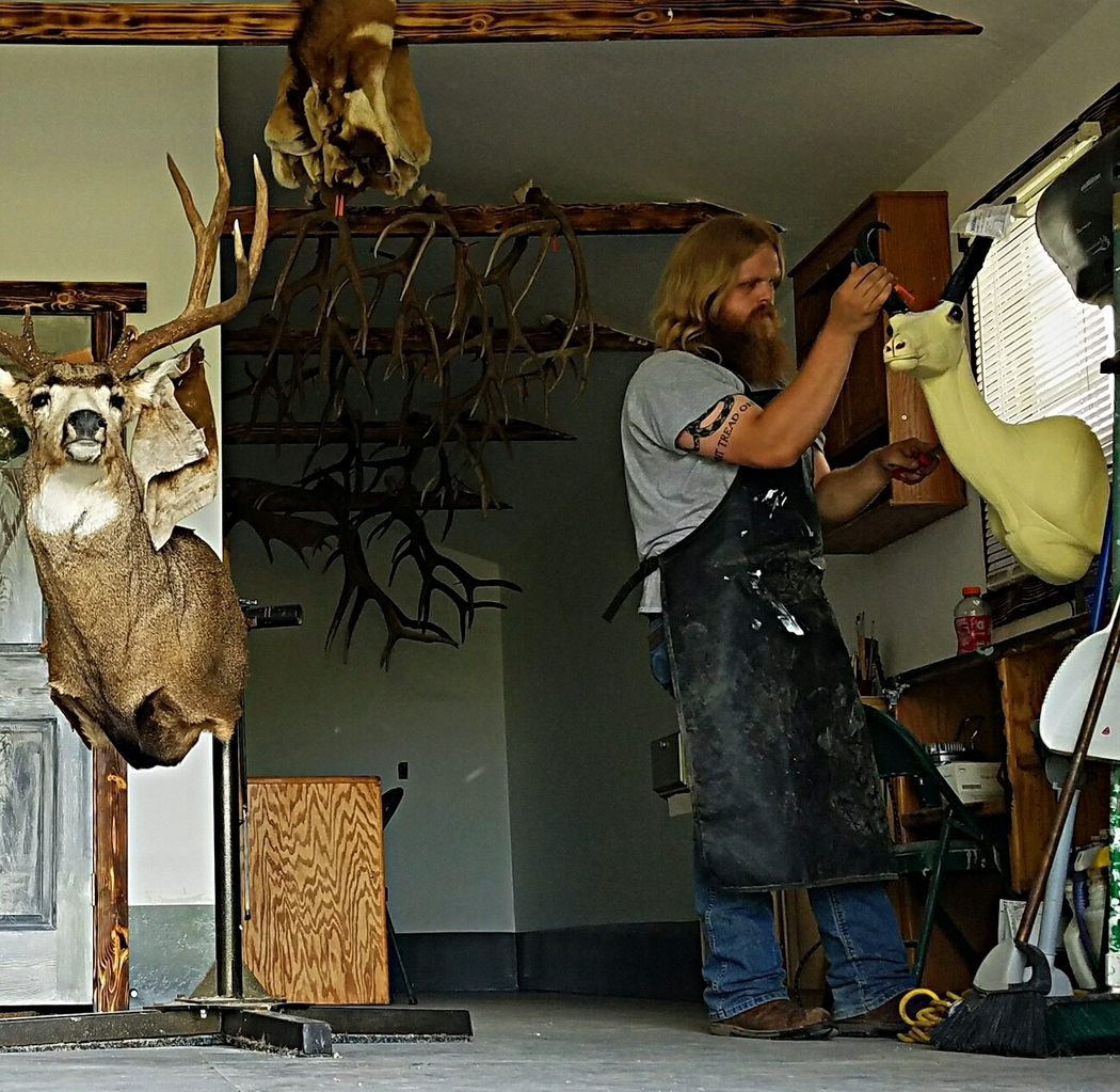 Wild to Wall Taxidermy