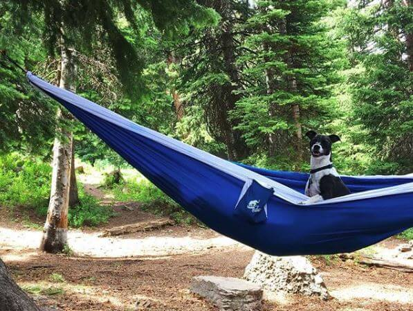 Trunk Outdoors hammock with dog