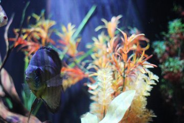 Choose your pace at the East Idaho Aquarium