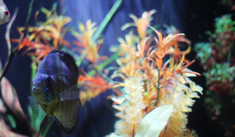Top 5 reasons to visit the East Idaho Aquarium