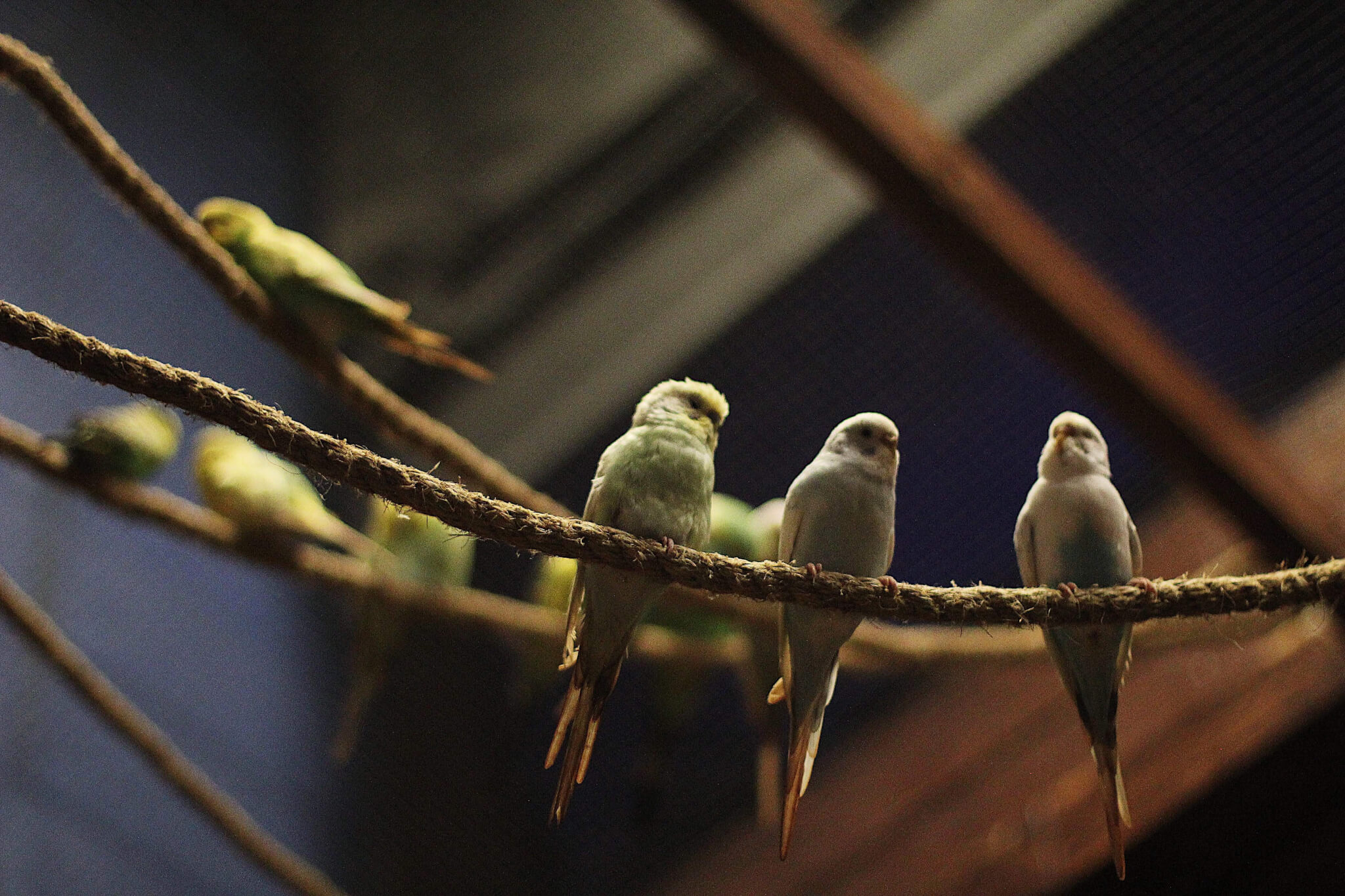 Experience wildlife birds indoors at the East Idaho Aquarium