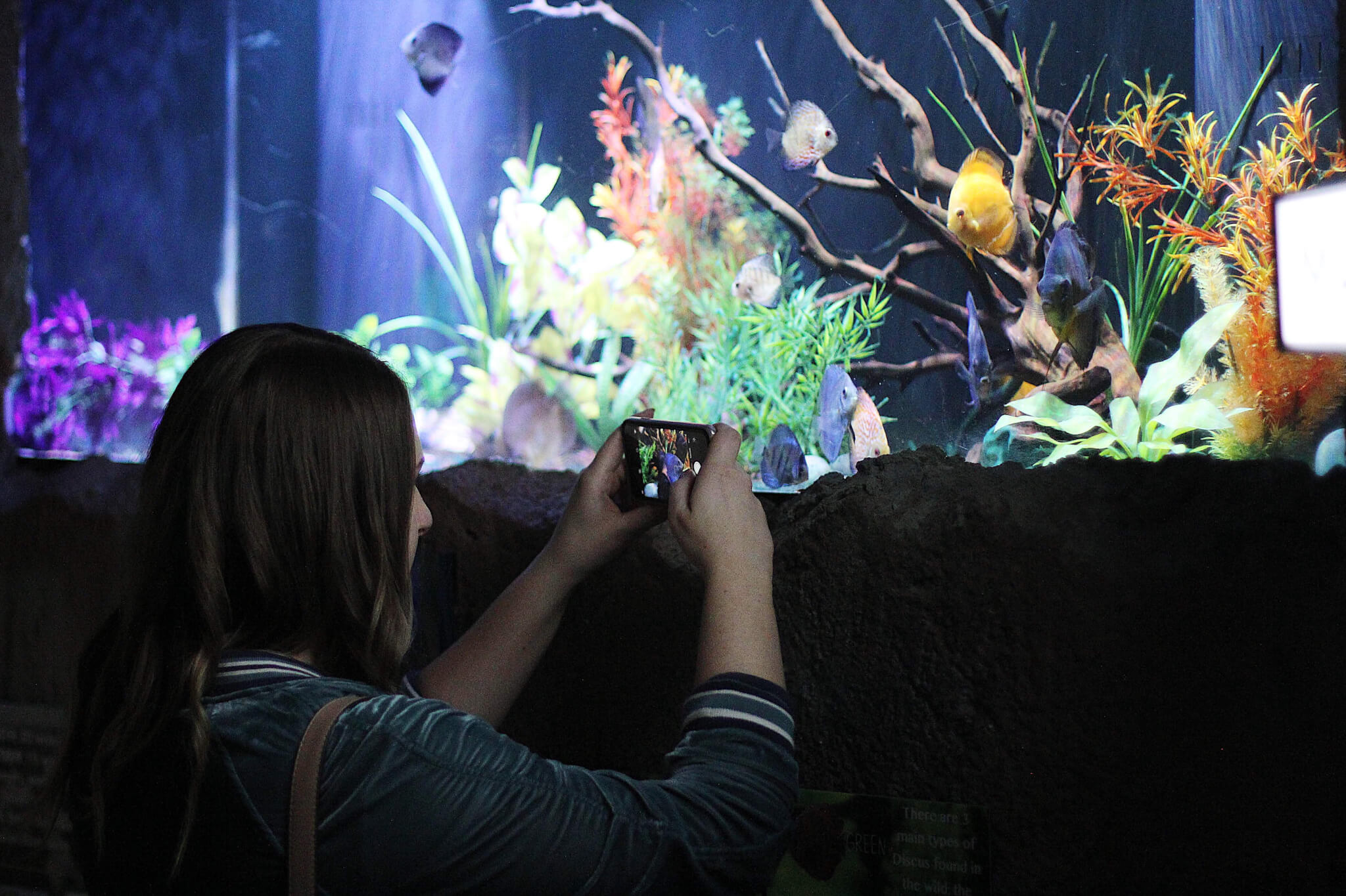 Take pictures at the East Idaho Aquarium