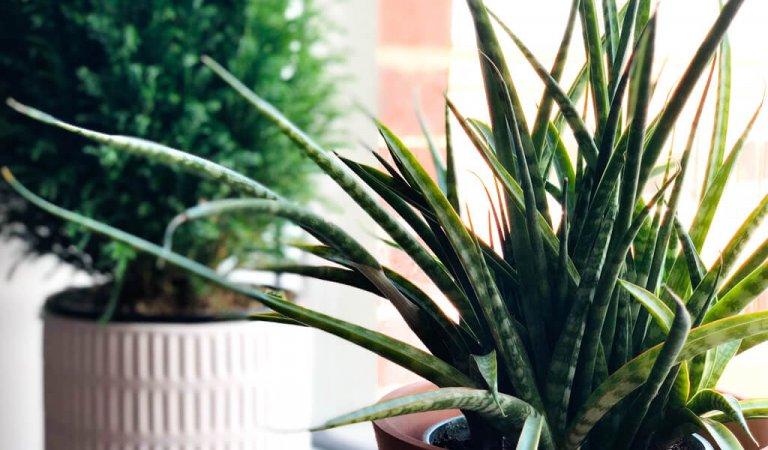 Top places near Rexburg to buy houseplants
