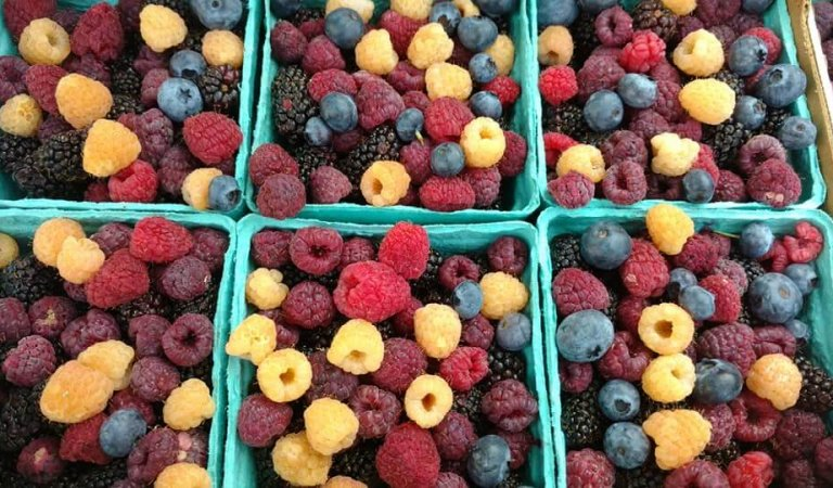 Try the Idaho Falls Farmer's Market on Saturday mornings