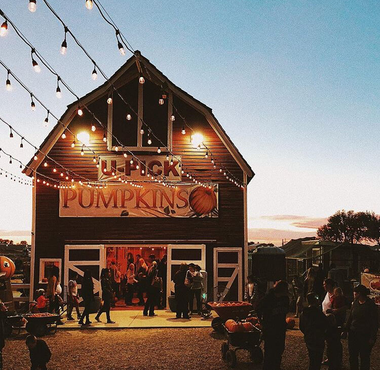 U-Pick Pumpkins is one of the great fall date ideas