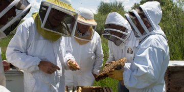 Students learning beekeeping