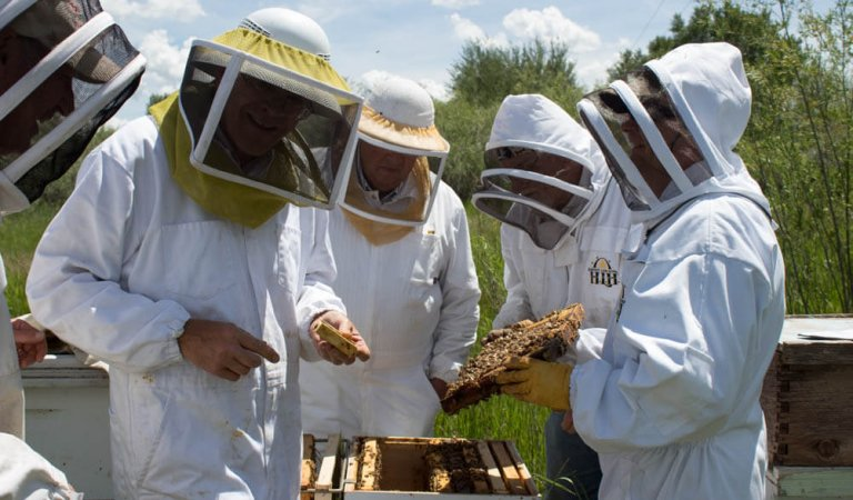 Beekeeping Course Offered for Novices in Rexburg