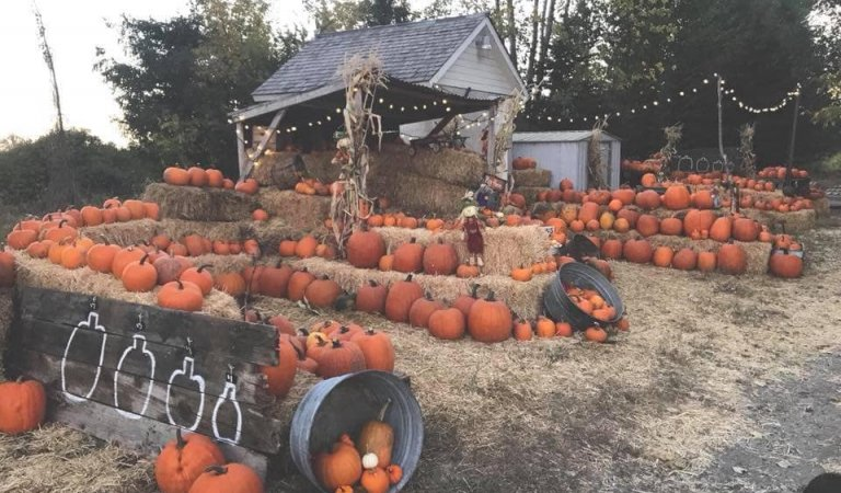 Pumpkin Patches in Southeast Idaho