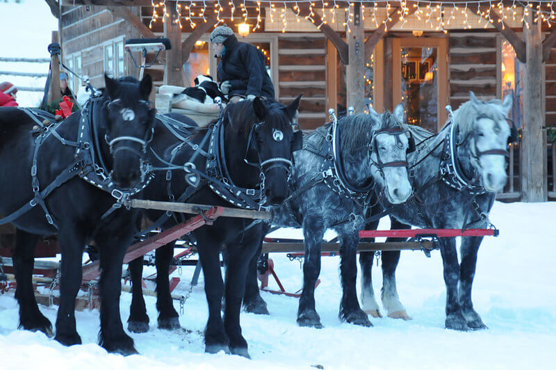 Winter Vacation - Sleigh Ride